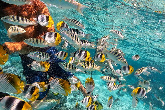 綠島浮潛-藍色雕魚