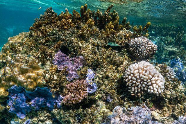 綠島浮潛-美麗的珊瑚礁