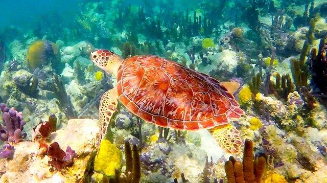 綠島浮潛-難得看到的海龜