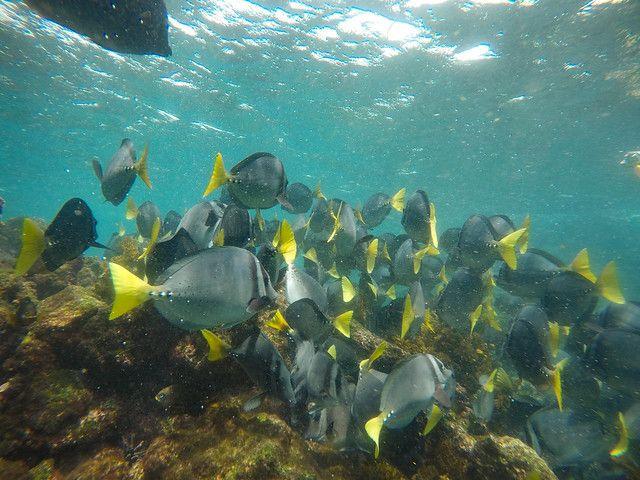 綠島浮潛-超大漁群