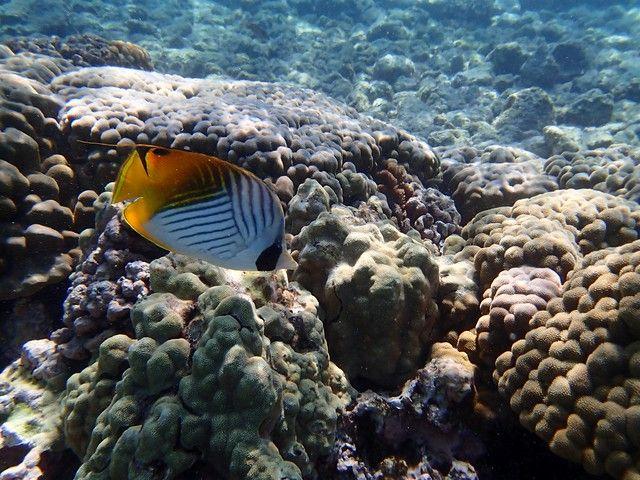 綠島浮潛-美麗的熱帶魚
