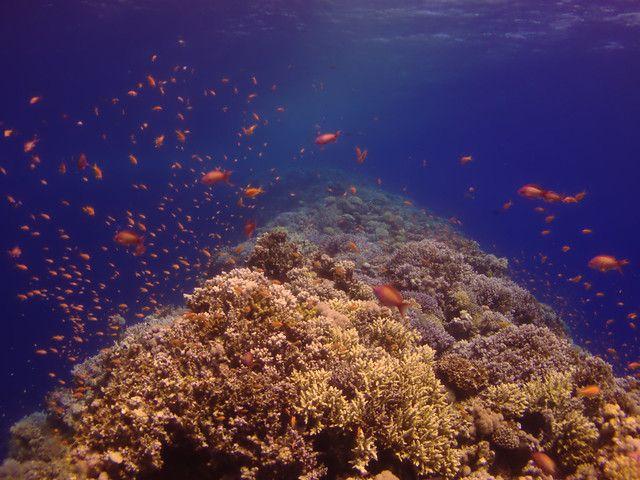 綠島藍洞深潛50米