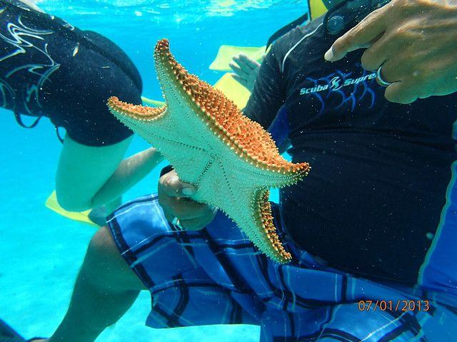 綠島浮潛-超大顆的海星