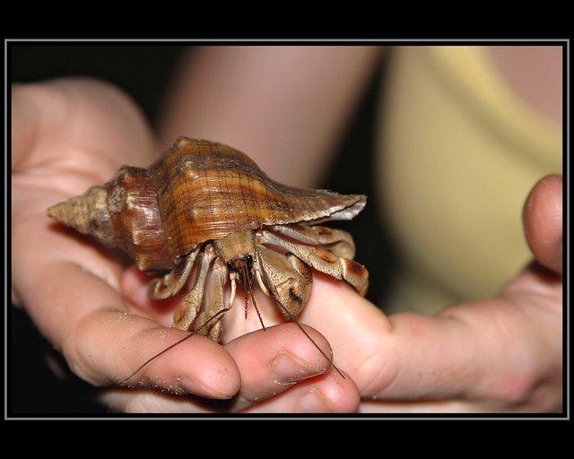 綠島潮間帶-寄居蟹