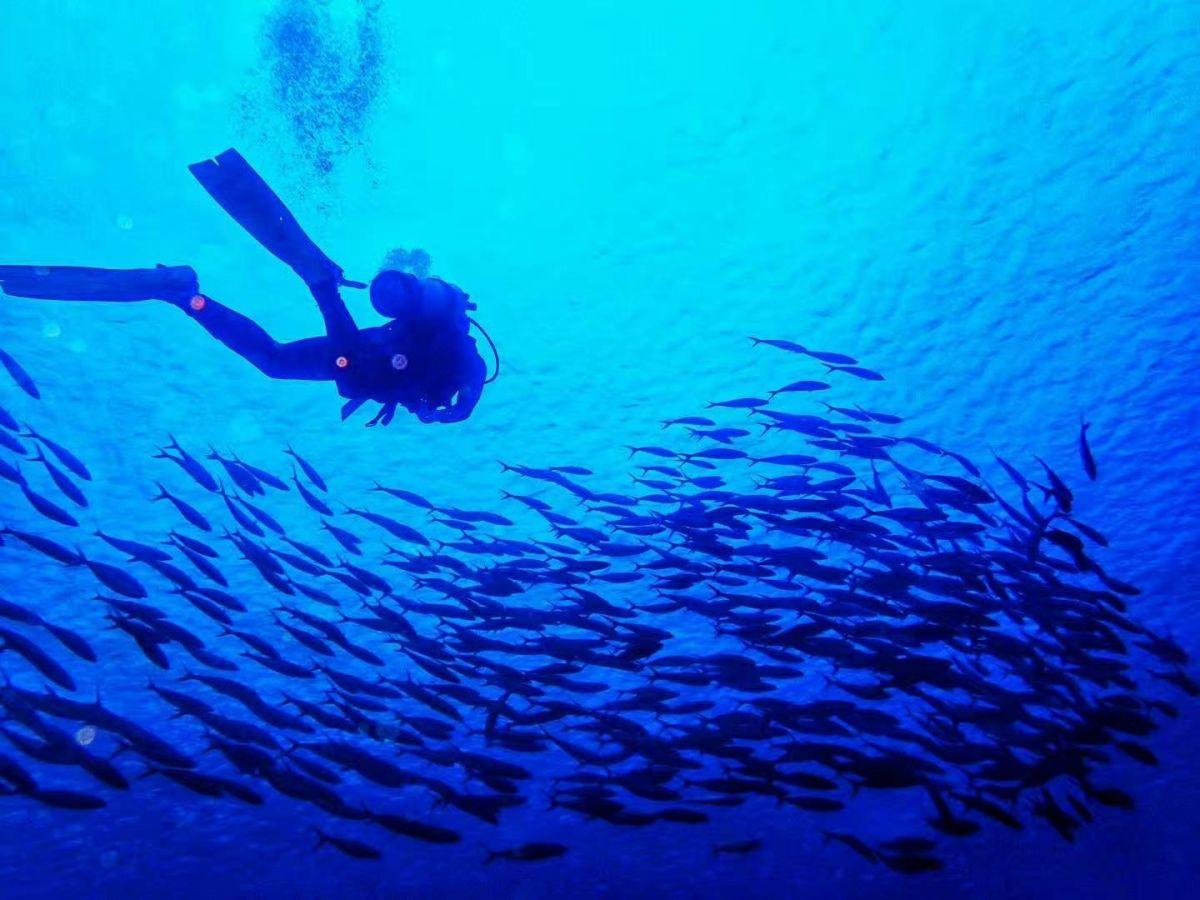 綠島潛水好多魚哦